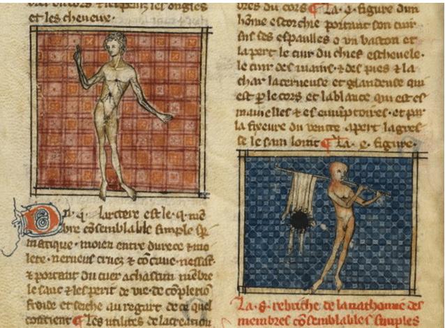 medieval anatomy