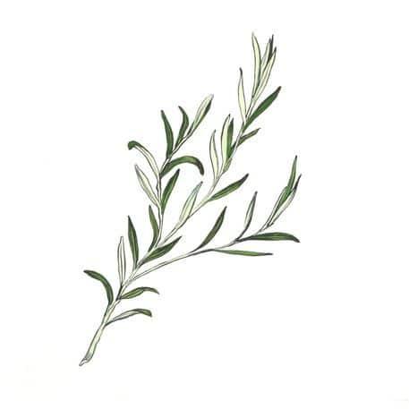 lavender leaves